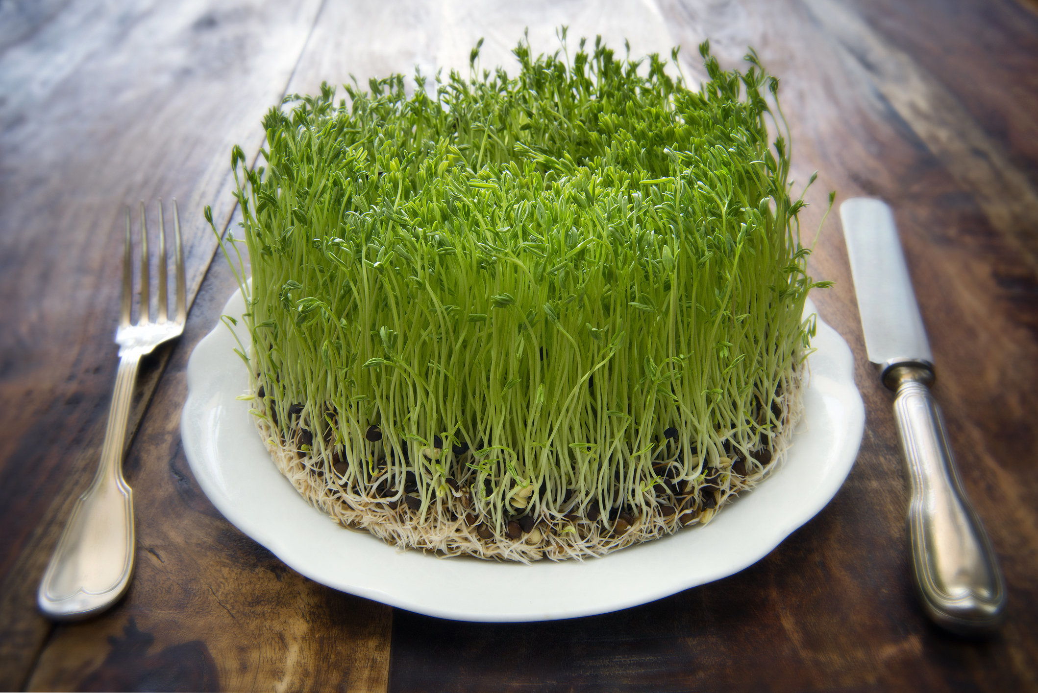 Eating Raw Sprout